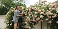 Vườn hồng cực đẹp của một người Việt ở Hungary
