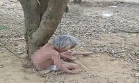 Chồng sai cháu xích vợ cả cởi trần vào gốc cây giữa trưa nắng cho... mát