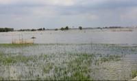 Lũ về sớm hơn dự báo, nông dân ĐBSCL thấp thỏm lo