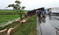 Xe chở lợn tông xe đông lạnh, 3 người nguy kịch