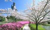 Đến Nhật Bản khám phá Ibaraki với những địa điểm đi hoài không chán