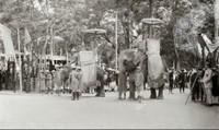 'Bí quyết' thuần hóa voi của người miền Trung 400 năm trước