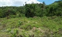 Mượn danh dự án thủy điện, chủ đầu tư ngang nhiên chặt cây trồng của dân