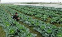 Tiếp thu, chỉnh lý Luật Trồng trọt, Luật Chăn nuôi: Cần bổ sung thêm điều kiện về nguồn nhân lực để kiểm duyệt giống