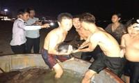 Kêu gọi chăm sóc cá heo bị thương dạt vào bờ biển