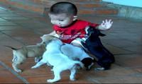 Nhà có trẻ , thận trọng nuôi chó mèo