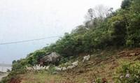 4 người trồng rừng  trên đảo Tổ Chim