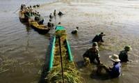 Bộ đội dầm mình dưới nước giúp dân gặt lúa