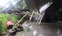 Lốc càn quét TT - Huế: Cây đổ la liệt, hàng trăm nhà bị tốc mái
