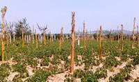 """Dự án đường tránh TP Kon Tum: Bất thường cây cối """"mọc"""" lên chờ đền bù!"""