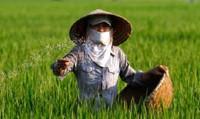 """Lạm dụng phân bón vô cơ: Nông nghiệp Việt đang """"chết dần, chết mòn"""""""