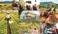 """An sinh xã hội và phát triển xanh:  """"Chìa khóa""""  giúp doanh nghiệp phát triển bền vững"""