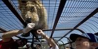 Độc đáo dịch vụ chui vào lồng để cù... sư tử