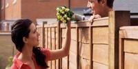 Cô bé hàng xóm và lỗ hổng trên tường