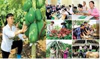 """Tín dụng cho nông nghiệp, người nghèo là một trong những """"trụ cột"""" của hệ thống chính sách giảm nghèo"""