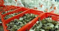 Kiến nghị nhiều giải pháp hướng đến xuất khẩu tôm bền vững