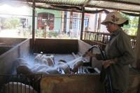 Thủ tướng chỉ đạo ngăn chặn sự xâm nhiễm dịch tả lợn Châu phi vào Việt Nam