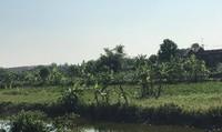 Lộ dấu hiệu 'dàn xếp' trong việc đấu giá đất ở Tiền Hải, Thái Bình