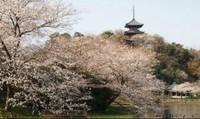 10 điểm đến hấp dẫn nhất ở Kanagawa