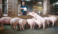 'Chỉ khoảng 4-5 tháng nữa, thịt lợn sẽ khan hiếm'