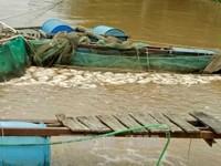 EU sẵn sàng chia sẻ với Việt Nam khắc phục hậu quả bão Damrey