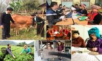 Hơn 71% hộ gia đình nông thôn không có khoản vay