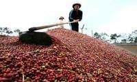 """Cà phê Việt Nam: """"Hàng hot"""" với thị phần thế giới"""