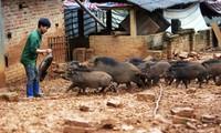 Bỏ đại học theo đuổi đam mê huấn luyện… lợn rừng