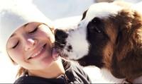 Để chó, mèo liếm mặt bạn có thể mắc phải hậu quả sức khỏe khủng khiếp này