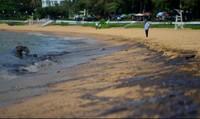 Không để xảy ra sự cố tràn dầu  tại vùng biển Quy Nhơn
