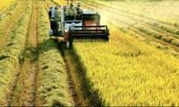 Cần Thơ huy động trên 20.000 hộ nông dân xây dựng vùng cánh đồng lớn
