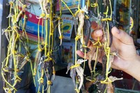 Những đặc sản được ví như 'thần dược' chốn phòng the ở Việt Nam