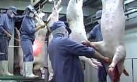 Hà Nội:  Khó khăn trong quản lý cơ sở giết mổ gia súc, gia cầm nhỏ lẻ
