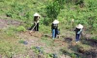 Không để lợi dụng quyền là chủ rừng để khai thác lâm sản trái phép