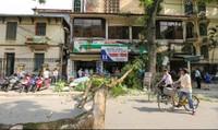Hoảng hồn vì cây xanh bất ngờ đổ giữa đường Hà Nội