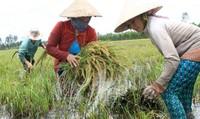 Chính phủ đề ra giải pháp căn cơ để phát triển bền vững ĐBSCL