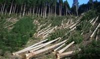 Khởi tố tạm giam hai trạm trưởng kiểm lâm để xảy ra phá rừng phòng hộ