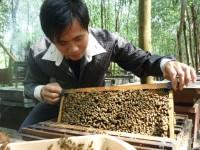 Lãng tử cùng ong