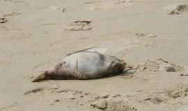 Bác thông tin cá chết do nhiễm độc dạt bờ biển Đà Nẵng