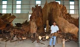 Sóc Trăng: Những tác phẩm kỳ thú từ gốc Bàng trăm tấn 700 năm tuổi