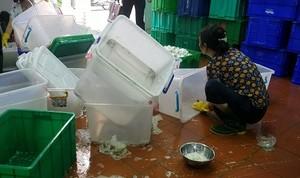 Phát hoảng vì nguồn gốc của những bộ bát đĩa đóng gói