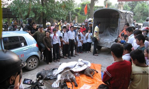 Số hổ bị bắt giữ vào tháng 10 năm 2009 trên một xe taxi ở Hà Nội có liên quan đến đối tượng Chiến