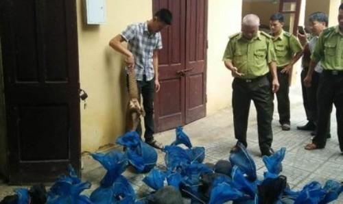 Thanh Hóa: Bắt giữ số lượng lớn cá thể tê tê trên đường đi tiêu thụ