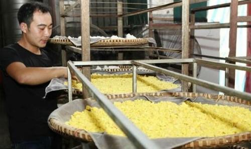 Cơ sở sản xuất tinh bột nghệ của anh Bùi Công Trung ở Tam Dương (Vĩnh Phúc)