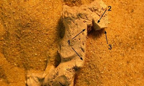 Vùng xương này có 3 vết dao cho thấy nó xảy ra sau khi nạn nhân đã chết