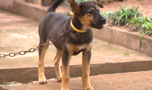 Cấm đối xử nhân đạo với vật nuôi từ năm 2020