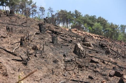 """Quảng Ninh: Kiểm lâm Đông Triều """"giật mình"""" sau khi  8 hecta rừng phòng hộ bị khai thác trắng hot"""