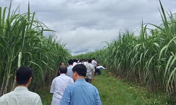 """Liên kết chuỗi sản xuất nông nghiệp: Doanh nghiệp và nông hộ cùng vào """"hợp tác"""""""