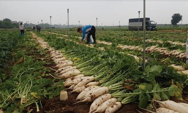 """Đổi mới chuỗi cung ứng: Có giảm thiểu tình trạng """"giải cứu"""" nông sản?"""