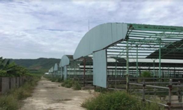 Vì sao nguyên Tổng Giám đốc đại dự án nuôi bò lớn nhất miền Trung bị khởi tố?